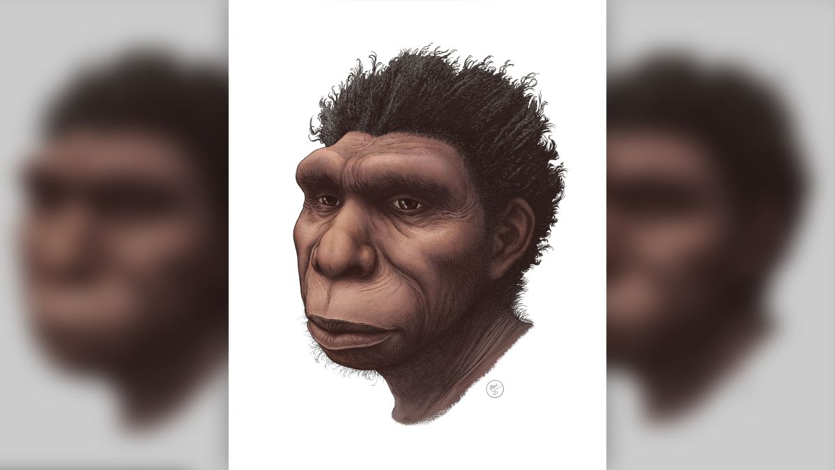 Newly named human species may be the direct ancestor of modern humans