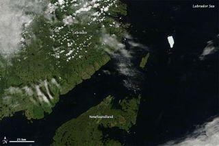 petermann-ice-island-110729-02