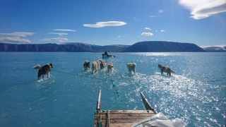 A June 13 photo shows sled dogs wading through water on an expedition that was forced to turn around due to anomalous early ice melt.