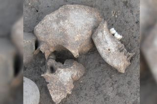 Human remains found at the Celtic site of Le Cailar in southern France.