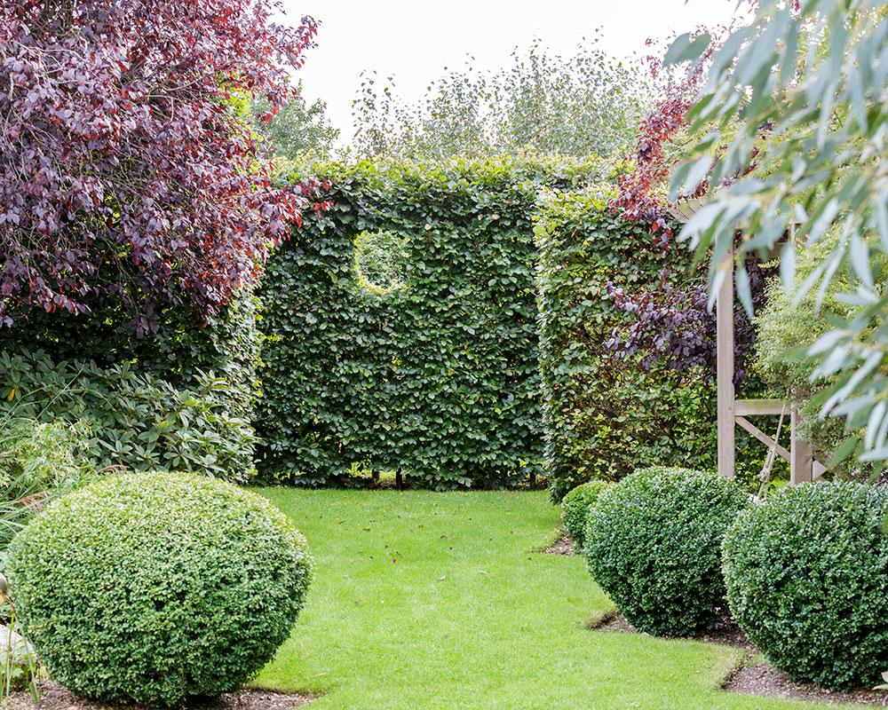 Instagram garden ideas