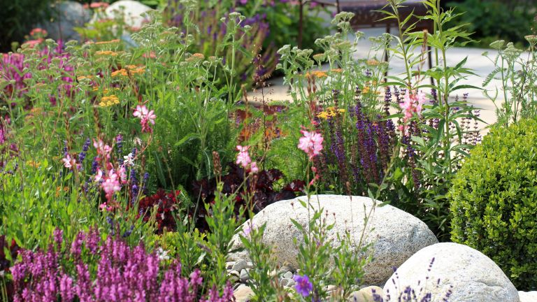 small rock garden ideas: colourful flowers in rockery