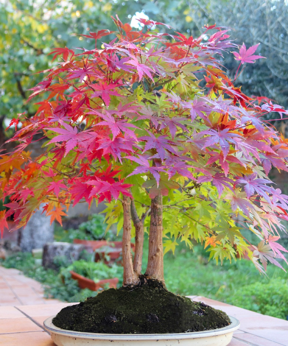 Best Trees For A Small Garden Top Choices For A Compact Outdoor Space
