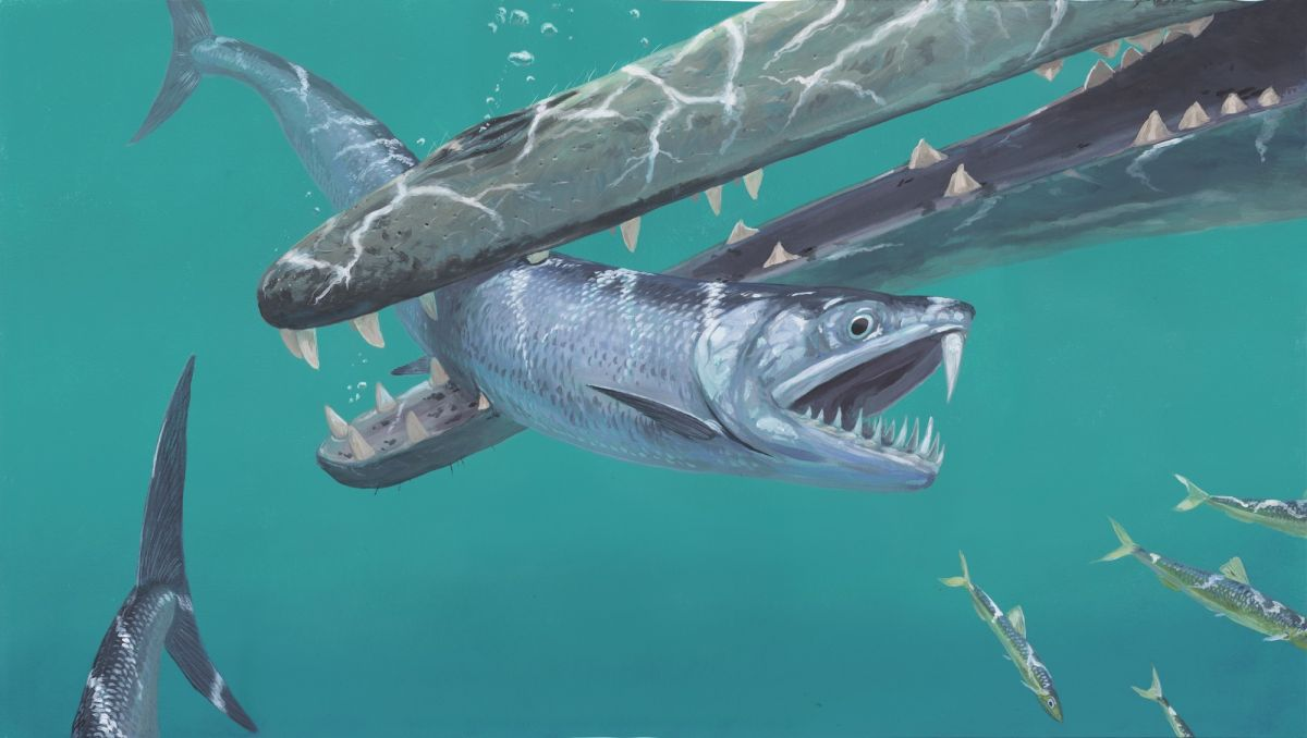 Ancient 'shapeshifting vampire demon' anchovy had saber tooth and fangs - Livescience.com