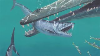 A painting of the 45-million-year-old saber-toothed anchovy Monosmilus chureloides chasing a shoal of smaller anchovies … until the early whale Dalanistes snaps it up.