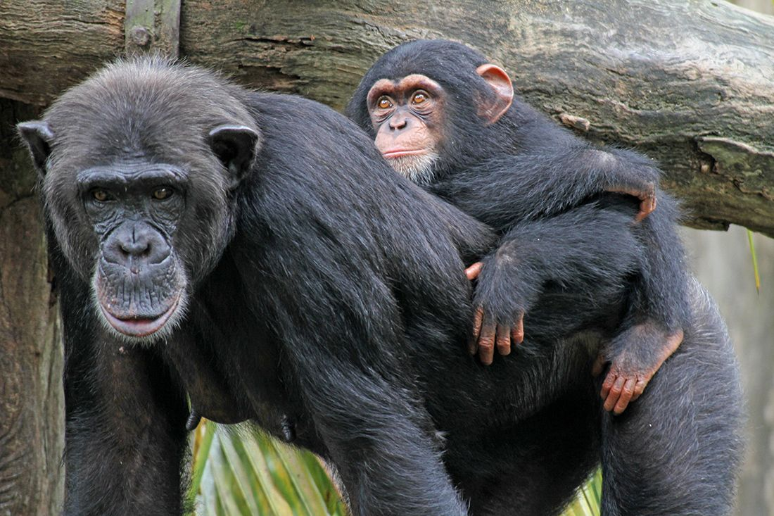 10 Animal Mothers That Carry Babies on Their Backs | Live