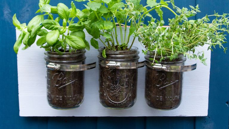 mini DIY herb garden