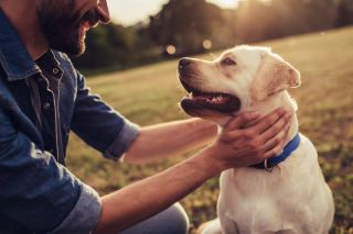 Men's Beards Contain More Harmful Bacteria Than Dogs' Fur