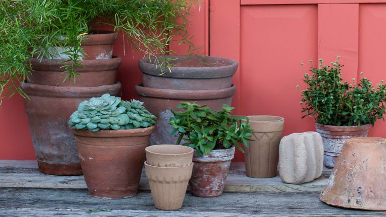 terracotta pots and plants up against a coral painted wall