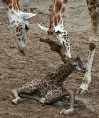 animals, cute baby animals