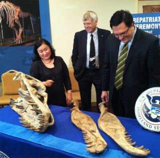 dinosaur fossils being returned to mongolia