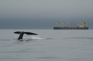 right whale and ship