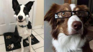 Genius Dog Challenge participants