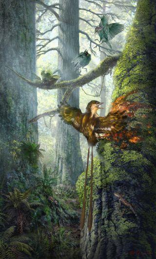 Mummified Bird Wings
