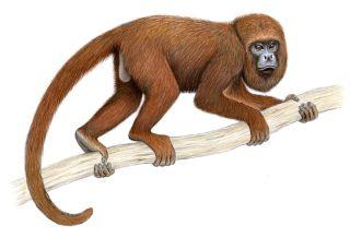 primates, endangered species