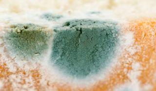 moldy-bread-100817-02
