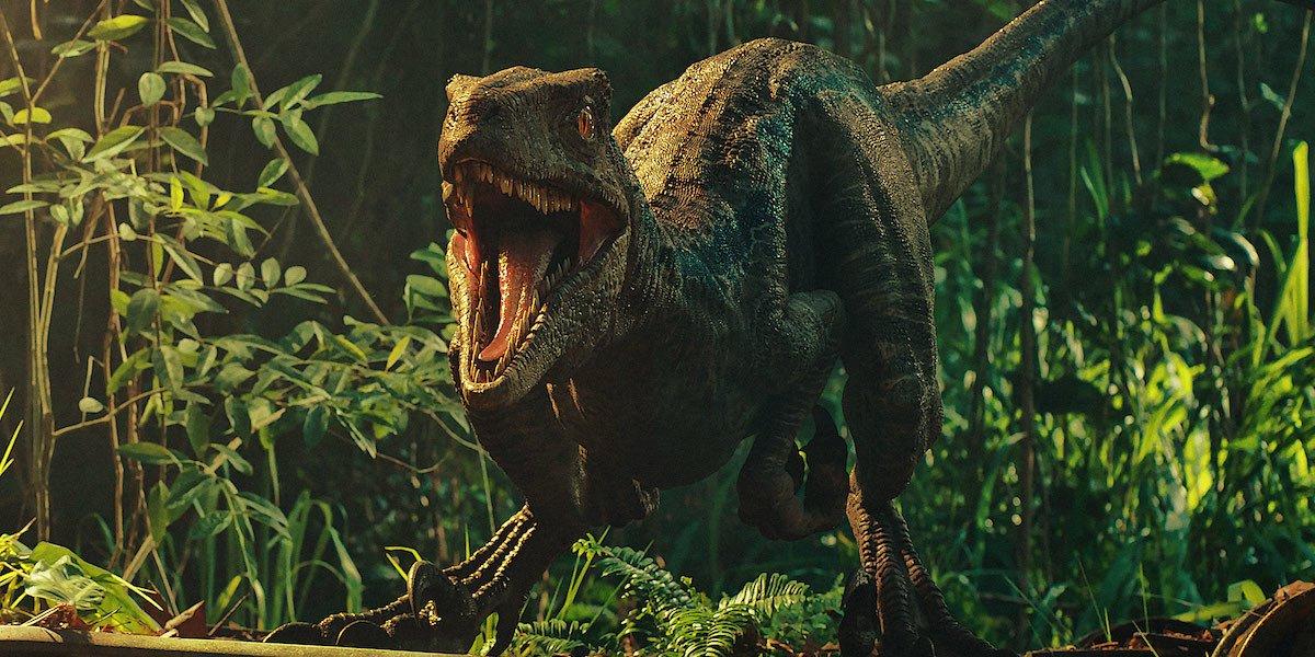 Blue the raptor in Jurassic World: Fallen Kingdom
