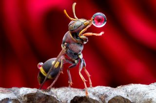An artfully positioned rose is reflected in a spit-globe produced by a Malaysian wasp.