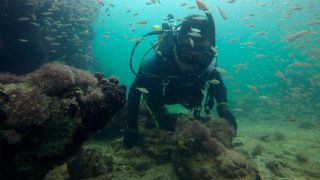 Scientists in Mexico have identified the wreck of La Union, a Mayan slave ship.