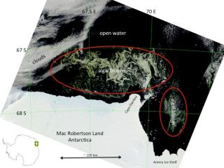 The behemoth algae bloom was spotted off the coast of Mac Robertson Land, Antarctica, by the Modis instrument aboard NASA's Terra satellite.