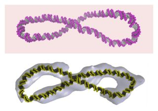 supercoiled dna