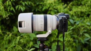 Canon RF 100-500mm f/4.5-7.1L IS USM telephoto zoom lens