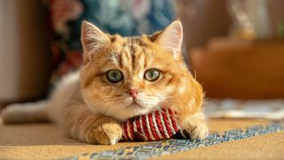 Cat Toys Amazon: ginger cat lying down looking at camera with chin resting on toy between paws