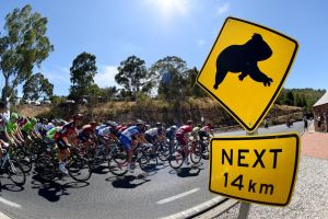 The peloton on stage 2 of the 2016 Tour Down Under