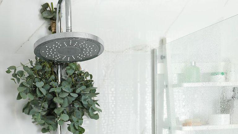A eucalyptus branch hangs from a shower head