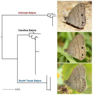 An image of new butterfly species