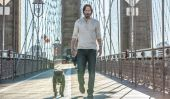 John Wick Brings His Dog To A Legendary Location In The First John Wick 2 Clip