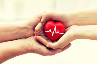 In an image representing organ donation, one person's hands give a plastic heart to another person.