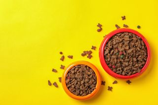 Where to buy pet food online