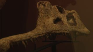 phytosaur skull with teeth