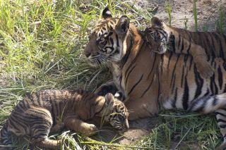 endangered species, cute baby animals