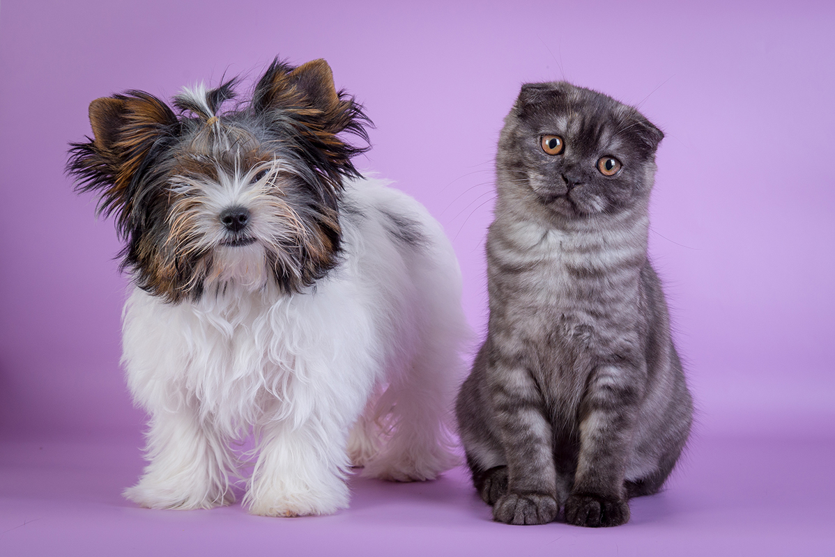 Why Dog Breeds Look So Very Different, But Cats Don't | Live Science