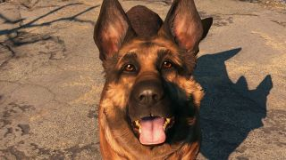 An image of Dogmeat from Fallout 4