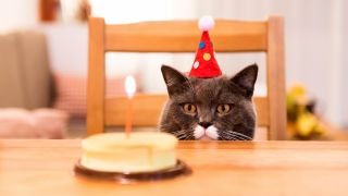 Cat birthday cake recipes: Cat sat on a chair at the table with birthday hat on looking at cake with candle