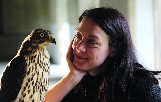 A haunting but uplifting story of grief being transformed by the love of a bird of prey called a goshawk.