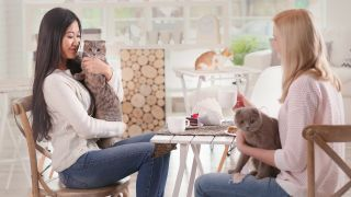 Should you visit a cat cafe? And what to expect when you go