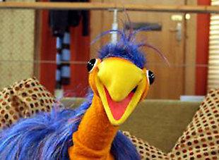 Emu returns to the small screen (VIDEO)