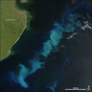 phytoplankton bloom in the sargasso sea
