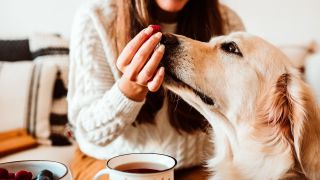 How much should I feed my dog? Dog being fed a raspberry by woman