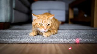 Laser toys for cats: Ginger cat chasing a laser dot on the floor