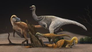 Artistic reconstruction of four representative alvarezsauroids, Haplocheirus sollers (left), Patagonykus puertai (upper middle), Linhenykus monodactylus (lower middle) and Bannykus wulatensis (lower right), illustrating the body size and dieting change in alvarezsauroid dinosaurs