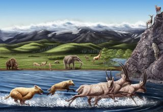 Artist's reconstruction of fauna from the Zanda Basin of Tibet dating to the Pliocene about 3 million to 5 million years ago.