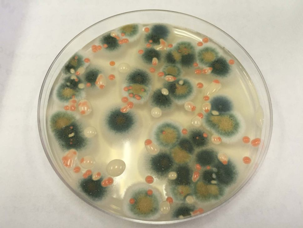 An investigation of bacteria and fungi taken from the space station reveals microorganisms similar to those found in busy public spaces on Earth.