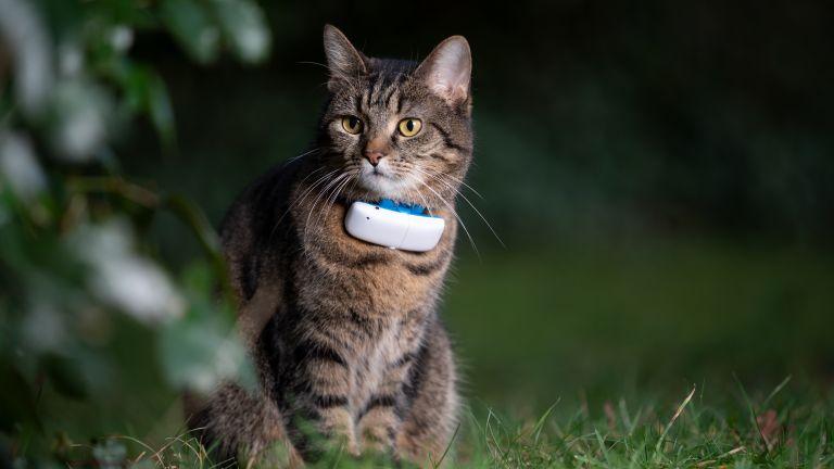 Best cat GPS tracker