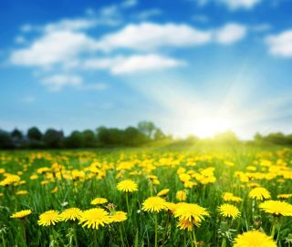 a field of yellow daisies on a summer day