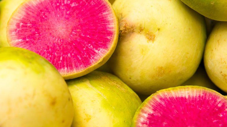 vegetables to plant in september: Watermelon radish at harvest